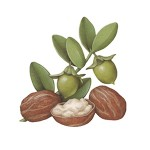 beurre-de-karite-bio